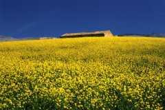 Sicilian-spring-colors-ph.C.Grillo
